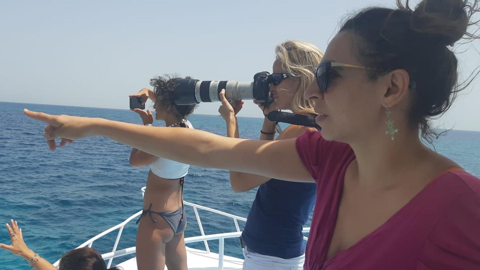 Delfinbeobachtung vor El Gouna